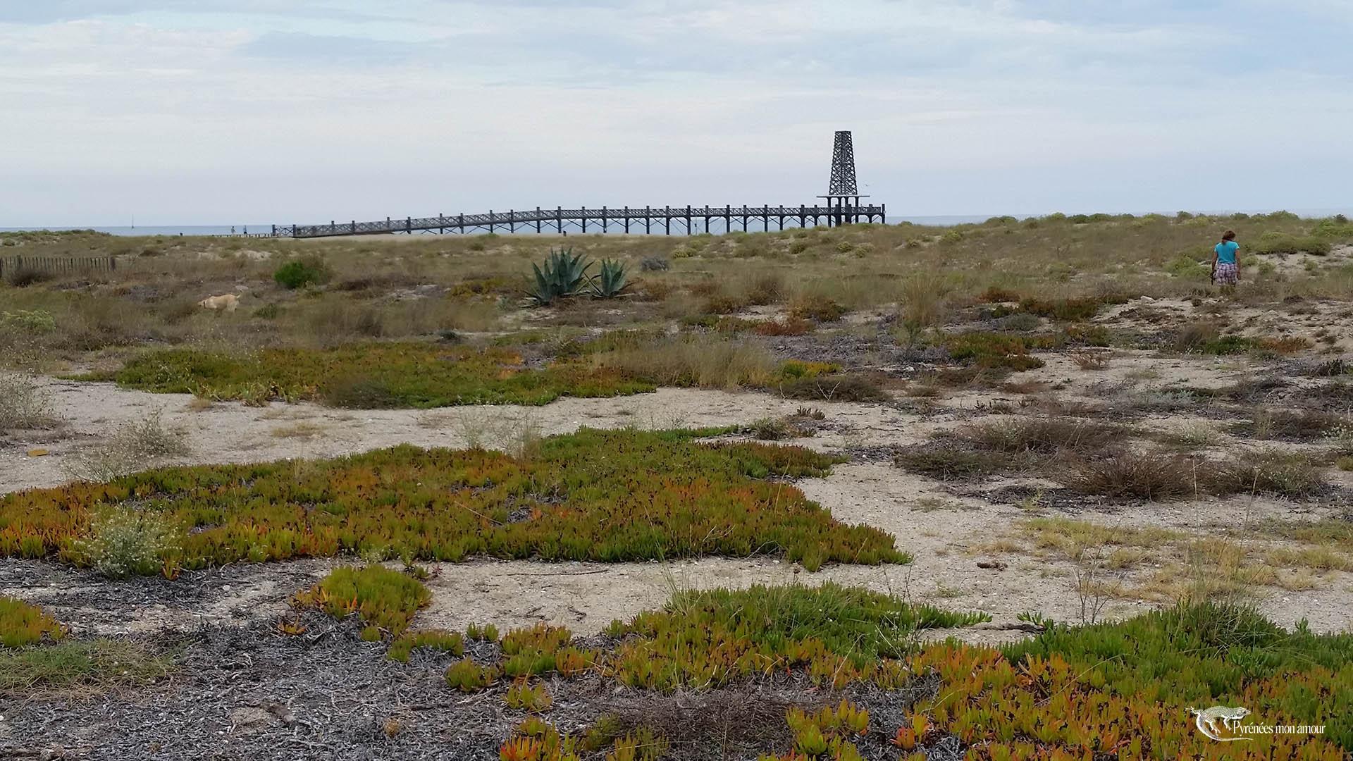 Port Leucate plage la dune