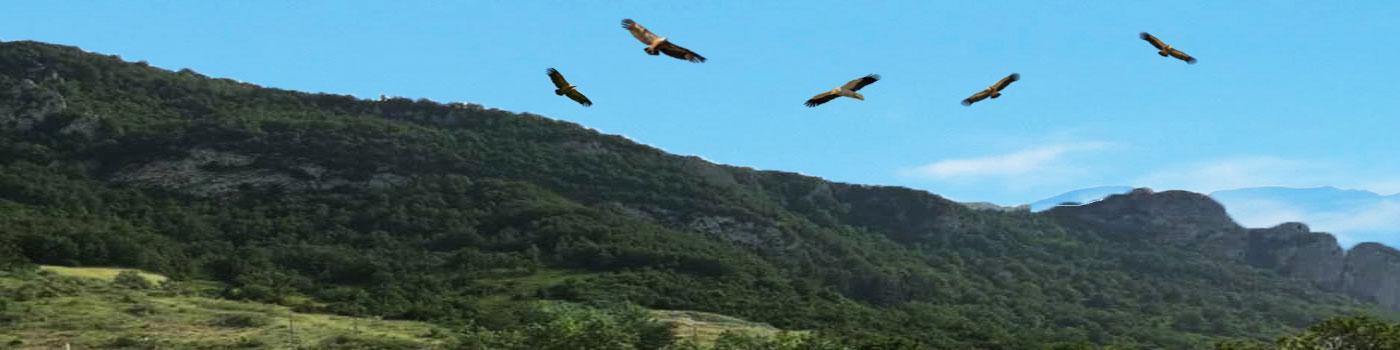 Observatoire vautour